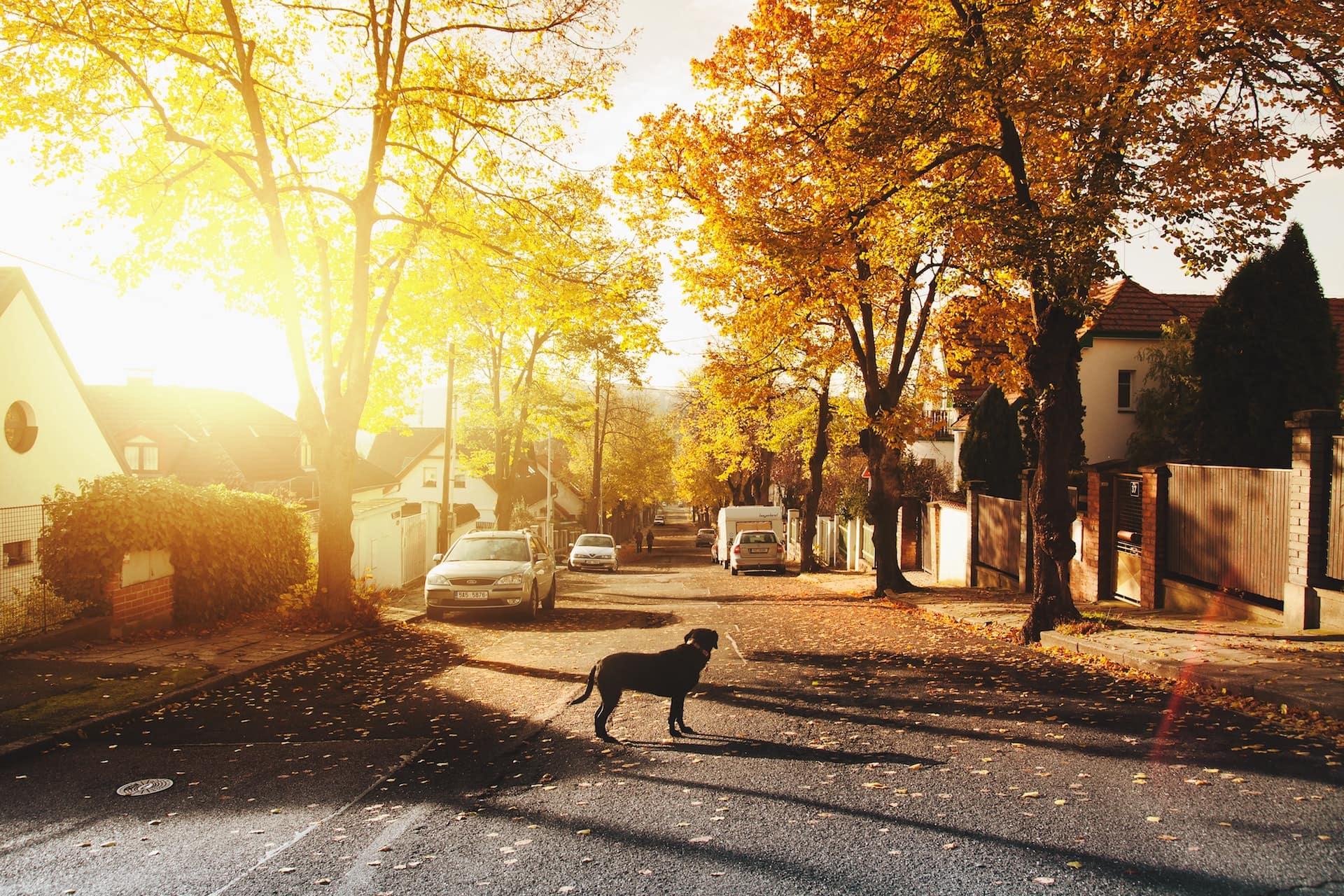 Dorfstraße bei Sonnenschein