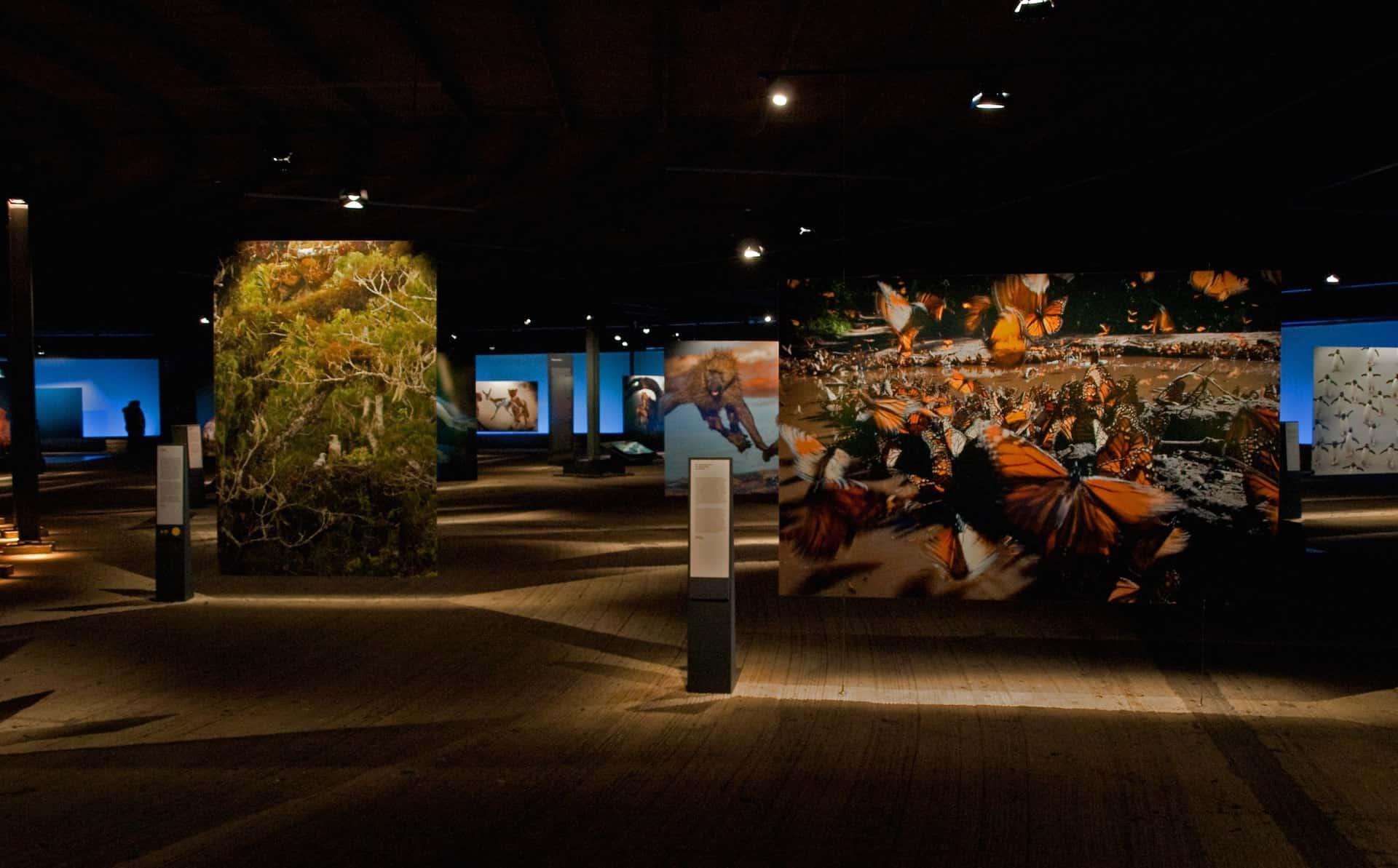 Die Ausstellung Wunder der Natur