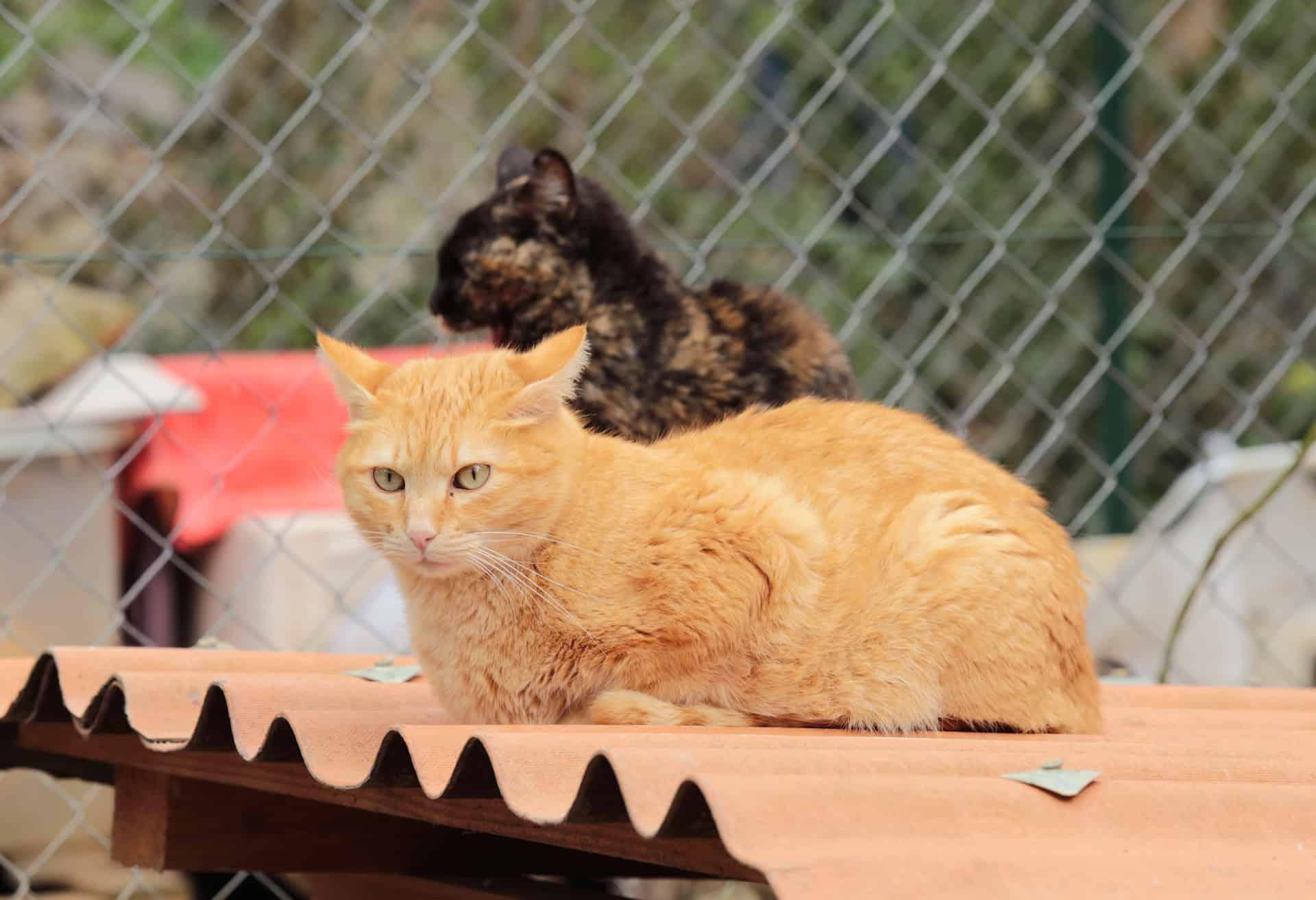 Katze sitzt auf Wellblechdach