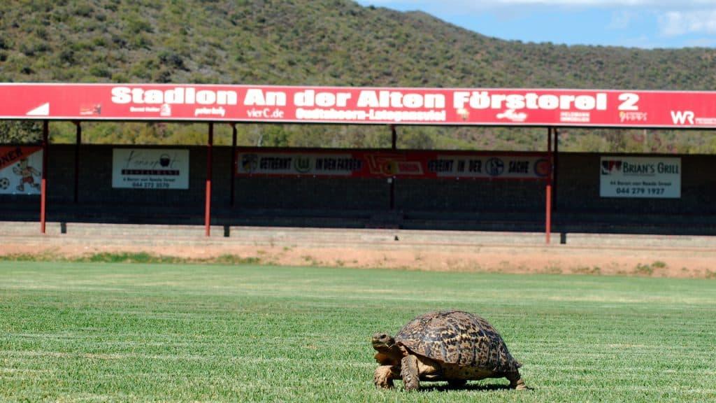 Fußballplatz mit Schildkröte