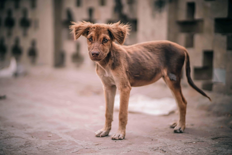 brauner Straßenhund
