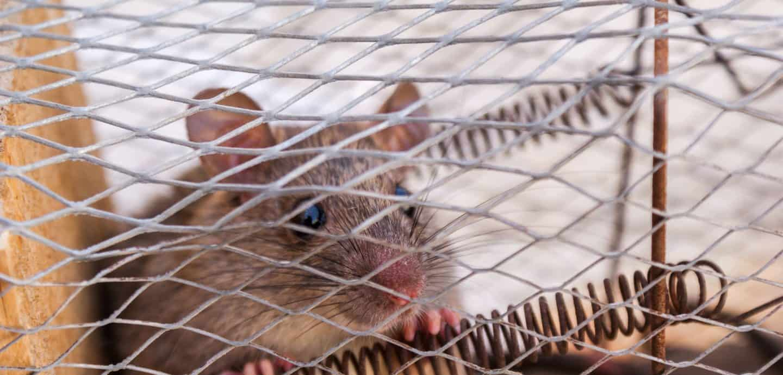 Maus im Kaefig