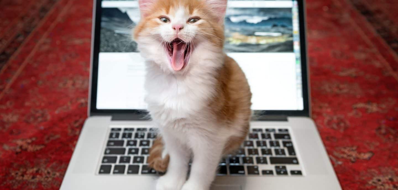 Katze auf Laptop