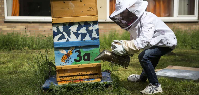 Schüler kümmert sich um Bienen