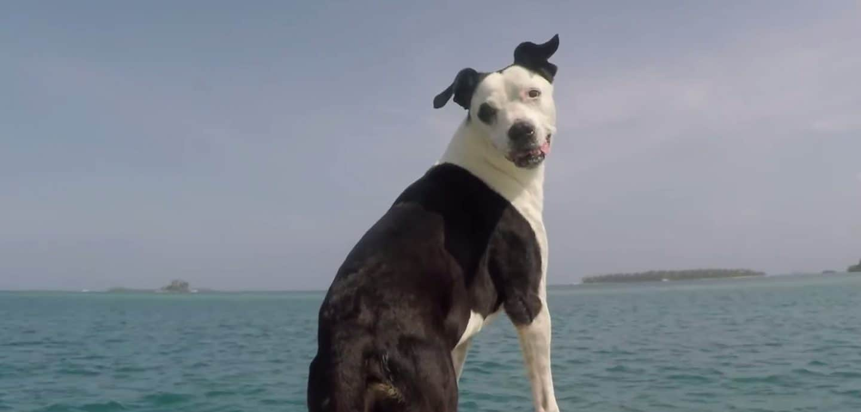 Hund vor Meer