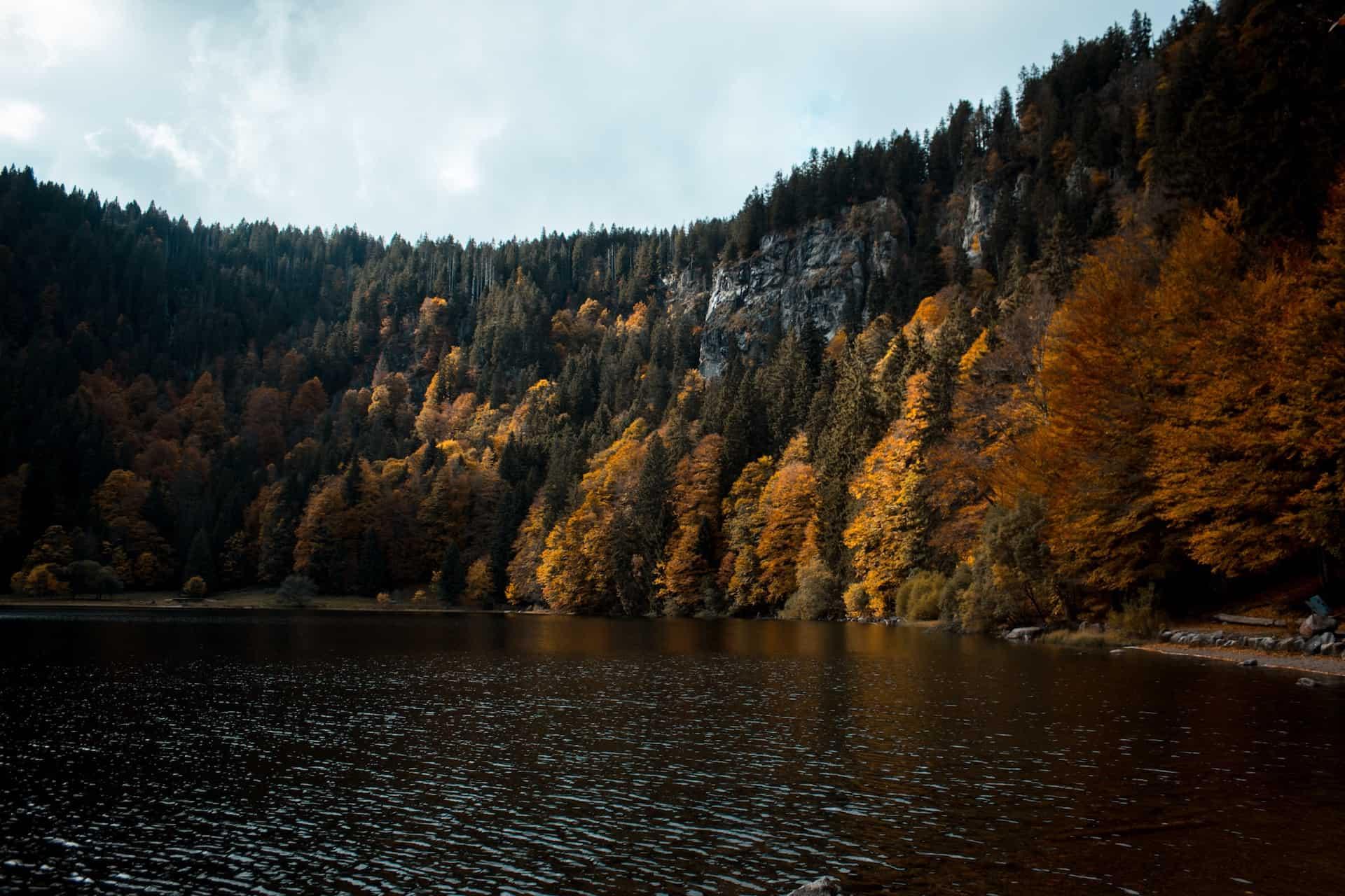 Schwarzwald im Vordergrund ein See
