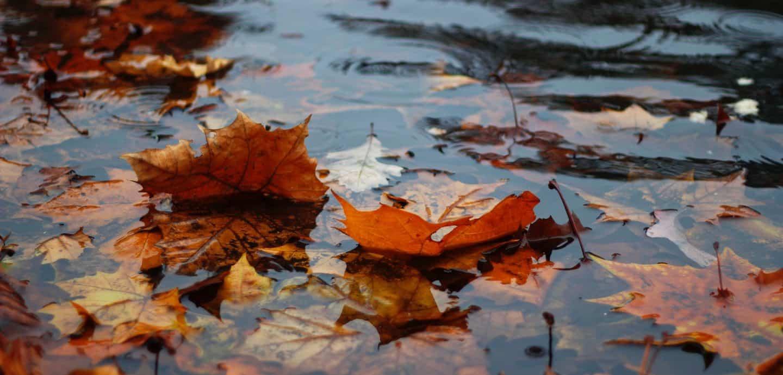Laub im Regen