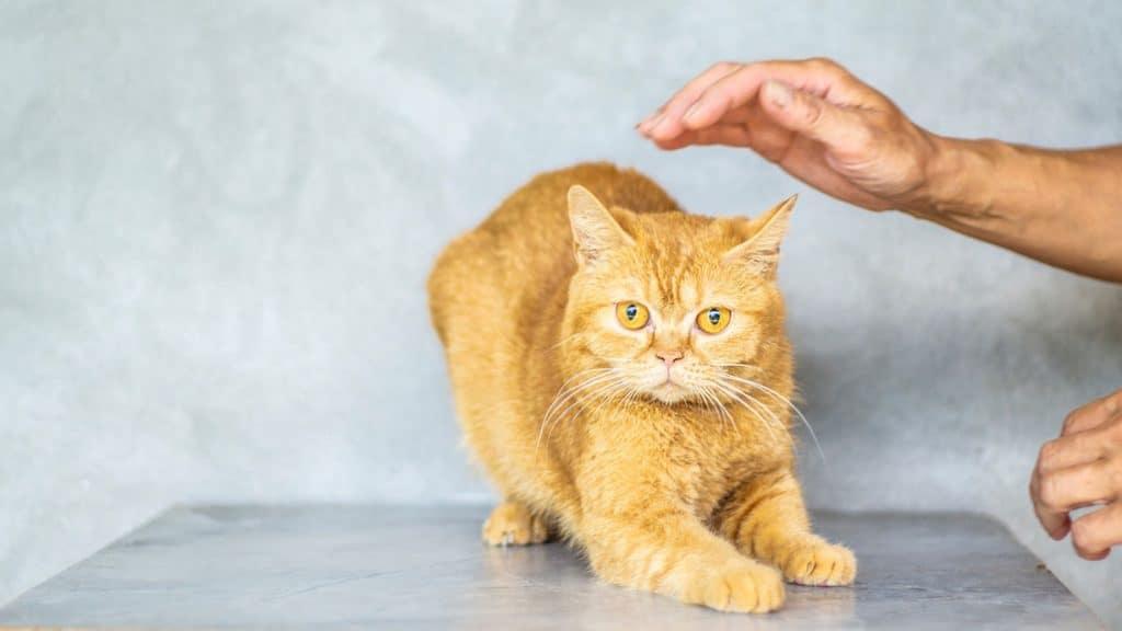 Eine Katze wird gestreichelt