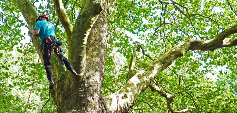 Ein spannender Studiengang ist Arboristik.