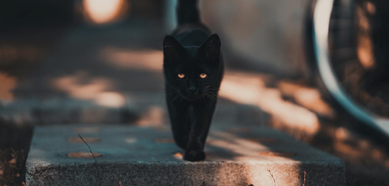 Eine schwarze Katze.