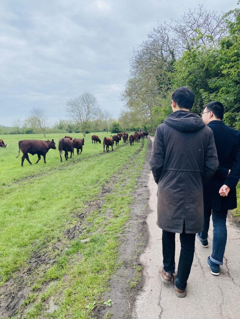 Ein Spaziergang über die Ländereien.